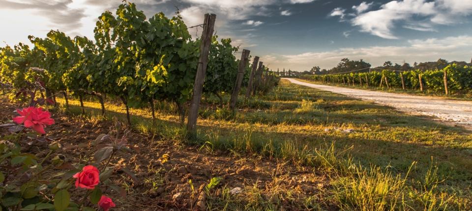 tuscany-428037